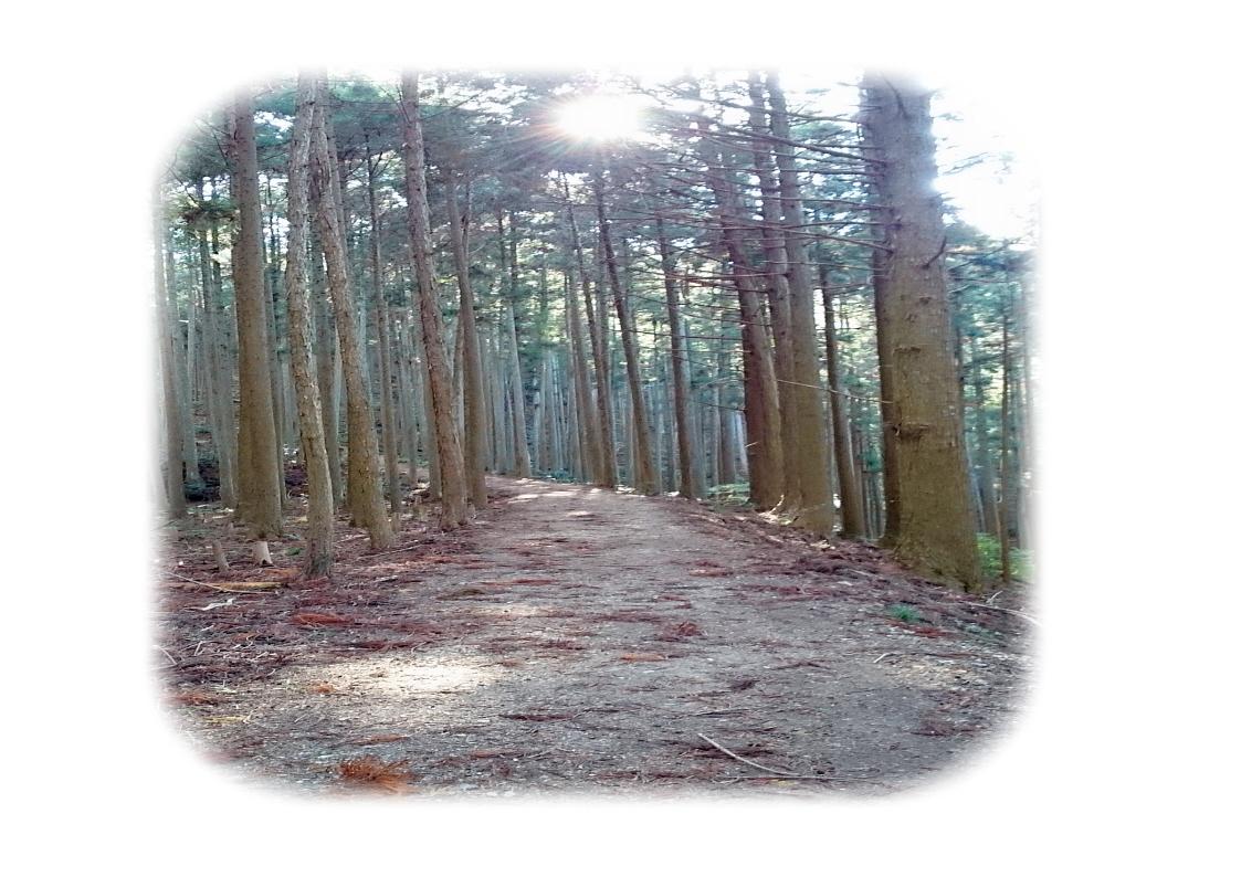 ⑨吉野山に続く道
