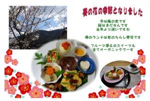 葵の春の花